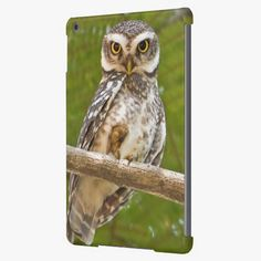 Awesome! This A spotted owlet wary of the photographer iPad air cases is completely customizable and ready to be personalized or purchased as is. It's a perfect gift for you or your friends.