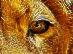 Image result for lions eye