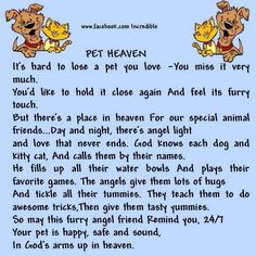 letter from dog in heaven Dog Poems, Dog Quotes, Animal Quotes, Animal Poems, I Love Dogs, Puppy Love, Pet Loss Grief, Dog Heaven, Rainbow Bridge