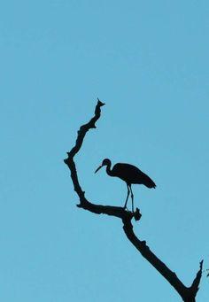 Heron resting -