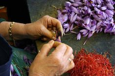 Saffron (the most expensive spice in the world).