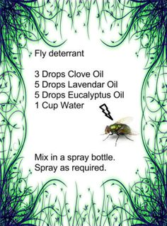 Your Own Fly Spray - Homemade Fly Spray with Essential oils. Just in time for summer!Make Your Own Fly Spray - Homemade Fly Spray with Essential oils. Just in time for summer! Young Living Oils, Young Living Essential Oils, Essential Oil Uses, Essential Oil Diffuser, Aromatherapy Diffuser, Homemade Fly Spray, Clove Oil, Tips & Tricks, Melaleuca