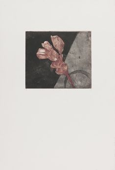 Fleur fanée 3 Eau forte, aquatinte, deux plaques superposées, en couleur