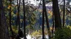 tranquility in Algonquin
