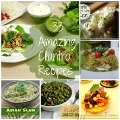 33 Amazing Cilantro Recipes - Happy Healthnut