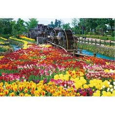 Beverly Jigsaw Puzzle M71-833 Five Waterwheels in Tulip Park (1000 S-Pieces)