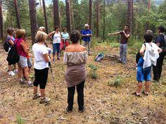 """""""Pimpollos, pinos y pinazos"""" mostrará cómo lograr el equilibrio entre las actividades humanas y la conservación del bosque"""