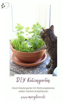 [Anzeige] DIY-Katzengarten für Wohnungskatzen gestalten & bepflanzen - #katze #katzengarten #diykatzengarten #katzendiy #kräutergarten #katzenkräuter Beautiful Cats, Most Beautiful Pictures, Diy Upcycling, Planter Pots, About Me Blog, Crafty, Pets, Animals, Inspiration