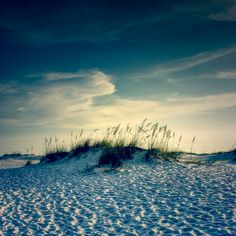 coastal fine art print wall hanging beachdune by photographybyVena, $25.00