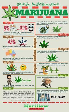 Medical Marijuana Facts Infographic on Behance
