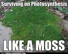 I never thought I'd tweet a biology joke, but this one is pretty awesome.