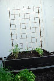 Var Dag i Mitt Liv: Armeringsnät Zinnias, New Homes, Outdoor Structures, Plants, House, Gardening, Terrace, Lawn And Garden, Haus