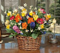 Spring Bulb mix Lot- Hyacinth + Crocus + Daffodils+ Tulips- 30 Bulb Collection~*Pre Chilled for Wint Fall Plants, Indoor Plants, Daffodils, Tulips, Easy Care Houseplants, Narcissus Bulbs, Perennial Bulbs, Most Popular Flowers, White Flower Farm