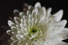 Yasunari Kawabata Flowers, Plants, Wordpress, Hearts, Naturaleza, Creativity, Lyrics, Plant, Royal Icing Flowers