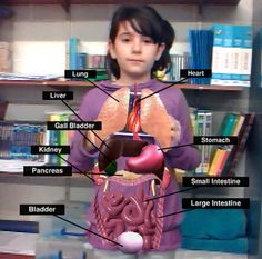 Realidad aumentada! Una gran herramienta para aprender de una forma lúdica! Ar Augmented Reality, Digital Literacy, Kids Learning Activities, Smart City, Body Systems, Science And Nature, Human Body, Teaching, Education