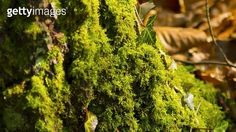 Close-Up Of Leaves On Tree 고요 고요한풍경 성장 아름다운자연 전원 조화 사람없음 나무 낮 녹색 비도시 수풀우거짐 식물 실외 이끼 잎 자연 천연무늬 풍경 가로 사진 선택초점 컬러 클로즈업 포커스 흐린배경