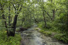 https://flic.kr/p/Gw43FS | Mountain stream in the forest | The Kamikochi valley