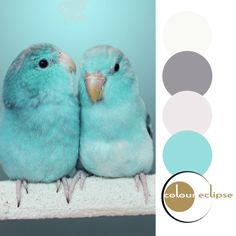 mint green parrotlet babies with color palette, robins egg blue, light turquoise, pantone limpet shell, golden brown