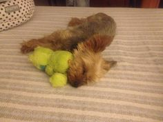 I love my Froggy and sneaky naps on Mum's bed!