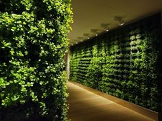 not a fan of the lighting, but i do love a good living wall
