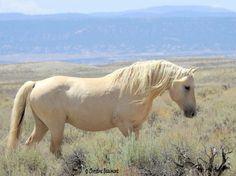 Beautiful Stallion! | TheSpectrumWorkshop.com • Artist Designed Goods Inspired by Life's Adventures