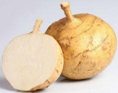 Get To the Root-Jicama