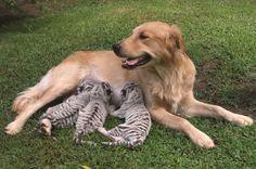 Filhos adotivos - amor incondicional
