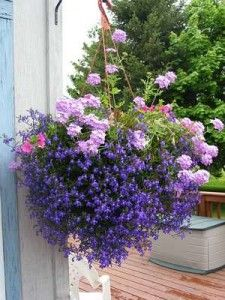 Hanging Flower Baskets-Would love to have this in my yard