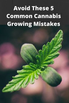 Avoid These 5 Common Cannabis Growing Mistakes Medical Marijuana Project Idea: Project Difficulty: Simple www.MaritimeVintage.com