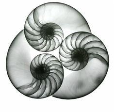 Albert Koetsier Photography. Photography website. INTERESTING PHOTOGRAPHERS from around the world. X-ray Photographer.