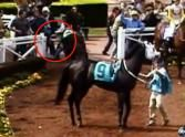 love.... 92 Year-Old Man Shields Girl With His Body as a Horse Tramples Them - a Guardian Angel!