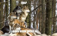 The Official Moon Moon Page: Photo