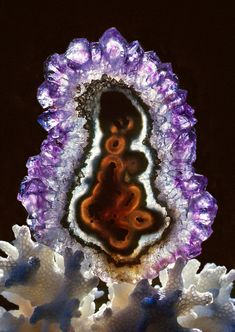 Amethyst-Stalactite-Cross-Section-on-Coral