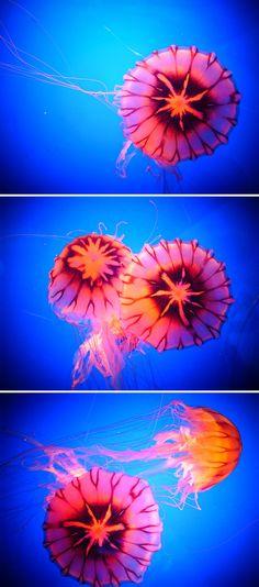By Ninagawa Mika. Jelly fish.