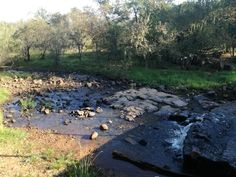 #buffelspoort #southafrica #nature South Africa, My Life, River, Nature, Photos, Outdoor, Outdoors, Naturaleza, Pictures