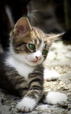 Could this be today's cutest kitten?