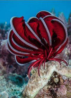 Pluma estrellas de mar mundo asombroso hermoso increíble