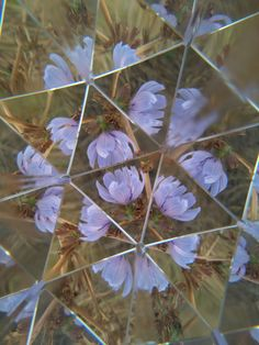 Lilac flowers with a cool prism photography kaleidoscope effect Distortion Photography, Reflection Photography, Digital Photography, Art Photography, Montage Photography, Headshot Photography, Inspiring Photography, Photography Editing, Lilac Flowers