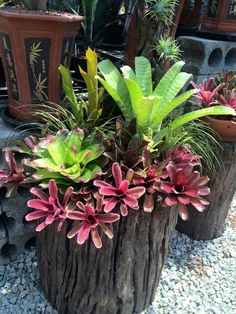 33 Beautiful Tropical Garden Design Ideas You Must Have - If you have sufficient place around your house then you can really let your fantasies run wild when it comes to picking your garden design. Succulent Landscaping, Succulent Gardening, Tropical Landscaping, Succulents Garden, Garden Pots, Backyard Landscaping, Container Gardening, Landscaping Ideas, Tropical Garden Design