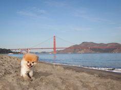 BOO!!!! Beach time ☀️