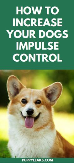 You know what makes dog training simple? Finding ways to increase your dogs impulse control. Here's 5 steps to take to keep your dogs attention and make English Dogs, Puppy Quotes, Dog Grooming Shop, Impulse Control, Cool Dog Houses, Best Dog Toys, Best Dog Training, Training Online, Brain Training