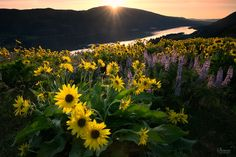 Flowery Spring - Beautiful spring sunrise in the gorge. Always love spring and the return of the wildflowers.