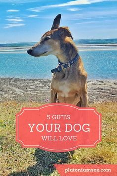 Gifts for dogs | If you own a dog or you're a dog lover, you probably want to treat your pooch to a gift every now and then. After all, pets are part of the family aren't they? Here are five gifts your canine friend will love. There are ideas to suit dogs