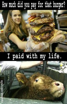 The price of a Hamburger