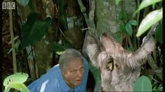 18 times David Attenborough was the best man to walk Planet Earth