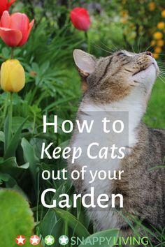 Outdoor cats often stray into other people's gardens, where they can wreck what you're trying to grow. Fortunately, there are some simple, cheap and perfectly humane steps you can take to keep cats out of your garden.