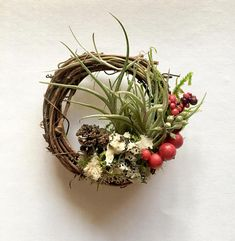 These mini living wreaths are an ADORABLE addition to your Christmas tree or as a home accent. They are made up of a living air plant along with some moss and dried floral accents. To care for the air plant, simply mist with water a few times a week. These mini wreaths can be