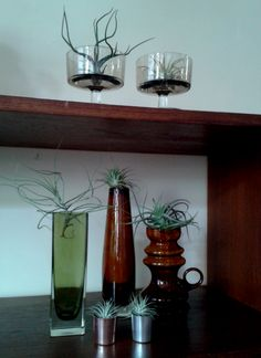Airplants and vintage glasswork