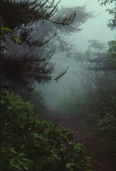 Fog in the forest Beautiful World, Beautiful Places, Dark Forest, Misty Forest, Foggy Forest, Forest Path, Forest Trail, Pikes Peak, All Nature