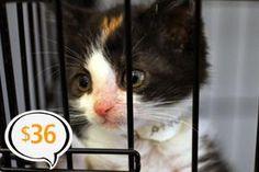 Animals need us. Please donate today.   ASPCA